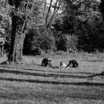 Fotografia zilei #1 – Zen Parenting