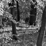 Fotografia zilei #2 – The road to perdition.